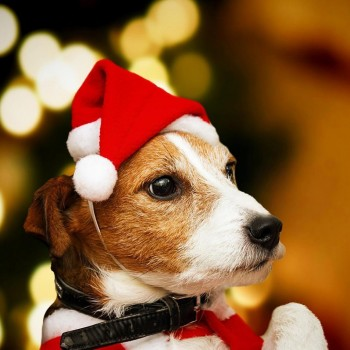 Gorro Papá Noel para mascotas